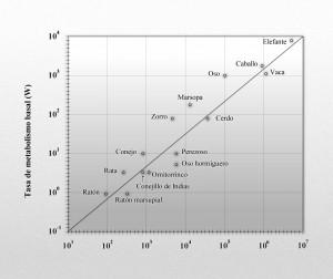 metabolismo_basal_kleiber